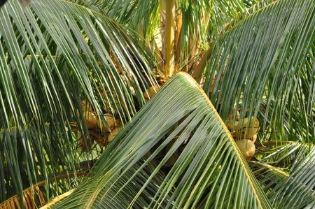 Palm Tree Stock Photo - 21710607