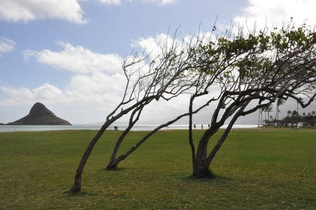 Chinaman s Hat Island in Oahu, Hawaii Stock Photo - 22005058