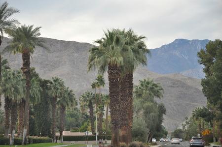 palm desert: Palm Desert in California