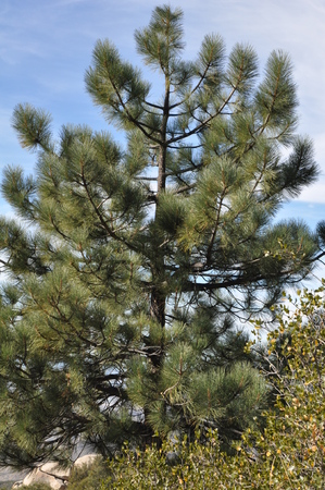 Pines to Palms Scenic Byway in California Stock Photo