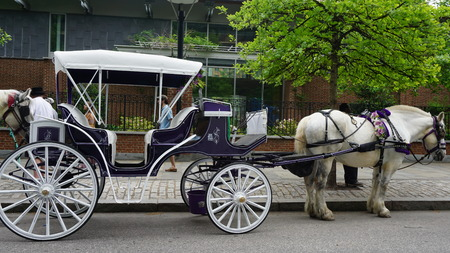 brotherly love: Horse and carriage rides in Philadelphia, USA