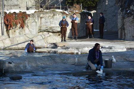 blue fish: Beluga whale feeding at Mystic Aquarium in Connecticut
