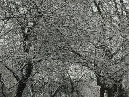 Snow on trees Stock Photo