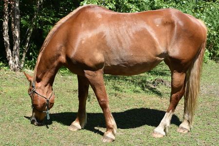 Horse 免版税图像