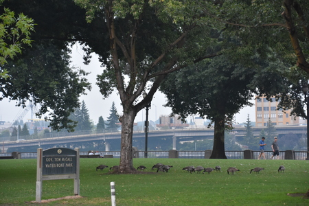 Tom McCall Waterfront Park in Portland, Oregon Imagens