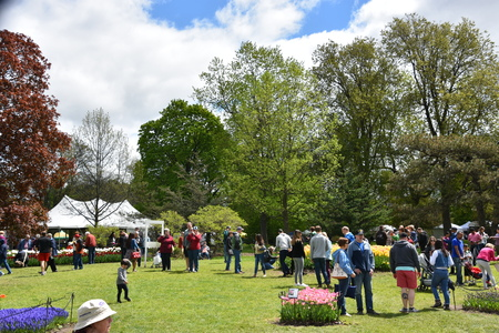 ALBANY, NY - MAY 11: The 2019 Tulip Festival at Washington Park in Albany, New York State, on May 11, 2019. The first Tulip Fest was celebrated on May 14, 1949 and is an annual event.