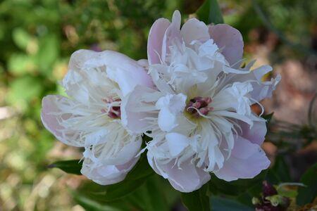 Flowers 版權商用圖片
