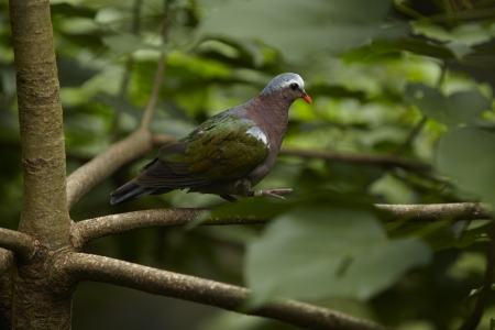 Bird in khao kheaw open zoo thailand  photo