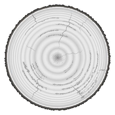 maderas: En escala de grises de madera blanda aisladas sobre fondo blanco.