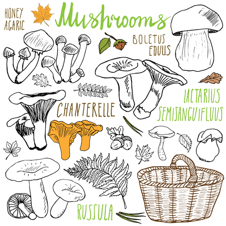 edible: Mushrooms sketch doodles hand drawn set. Different types of edible and non edible mushrooms. Vector icons on white background.