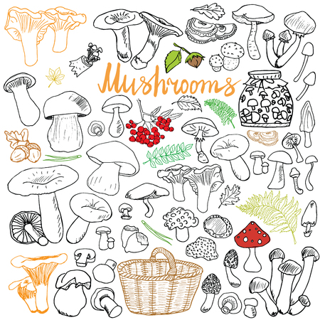 edible: Mushrooms sketch doodles hand drawn set. Different types of edible and non edible mushrooms. Vector icons on Chalkboard background.
