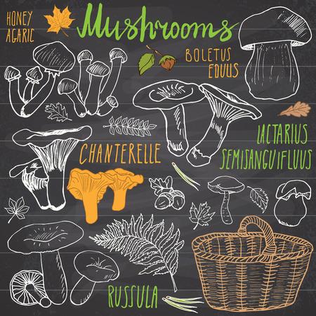 버섯은 낙서를 손으로 그린 세트를 스케치합니다. 식용 및 비 식용 버섯의 종류. 흰색 배경에 벡터 아이콘.