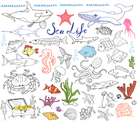 at sea: Big sea life animals hand drawn sketch set. doodles of fish, shark, octopus, star, crab, whale, turtle, seahorse, seashells andlettering, isolated Illustration