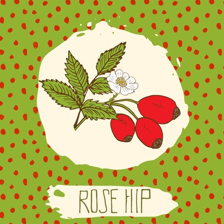dogrose: Dogrose hand drawn sketched fruit with leaf on background with dots pattern. Doodle vector rose hip for logo, label, brand identity.