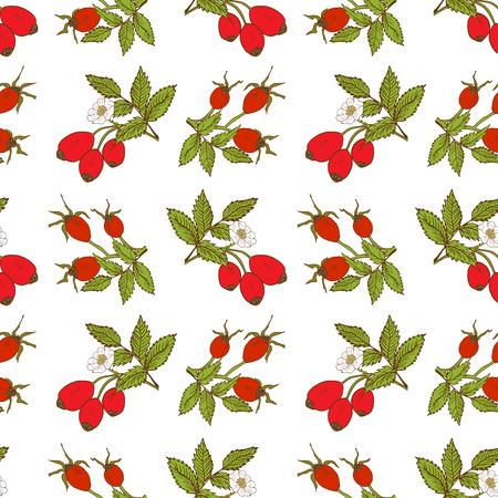 Patrón sin fisuras de fondo de fruta con el boceto dibujado a mano ilustración vectorial de rosa de la cadera.