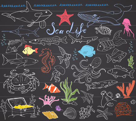 Big sea life animals hand drawn sketch set. doodles of fish, shark, octopus, starfish and crab, whale and sea turtle, seahorse and seashells and lettering, on chalkboard.