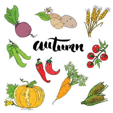 season: Autumn season set.