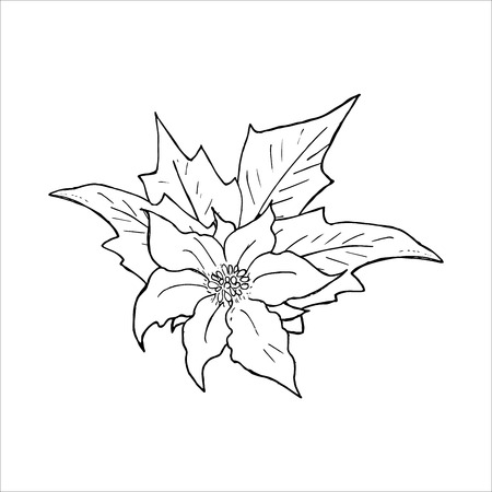 Poinsettia flower hand drawn icon, Outline sketch doodle. Vector Illustration isolated on white