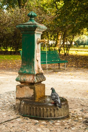 Italian drinking well in a park with water and pigeon.