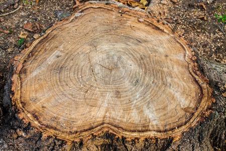 Tree stump wood close up. wooden texture background, Grunge textured image.