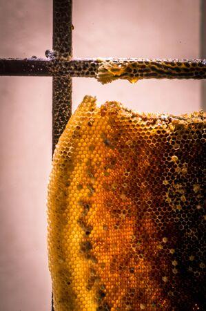 Honey bee and the honey