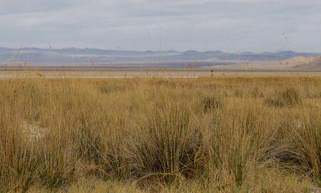mojave: Mojave Desert