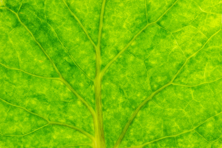 Closeup texture of green leaves. Suitable for use in the background of natural articles.