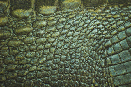 Closeup texture of Crocodile leather skin. Suitable for use in the background of leather fashion or animal conservation articles.