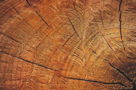 Close up texture of cutting timber by chainsaw. Concept campaign of Global warming and forest preservation. Imagens
