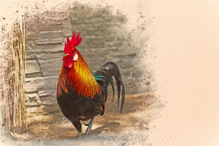 Rooster walking in the farm. Digital watercolor painting effect. Copy space for text.