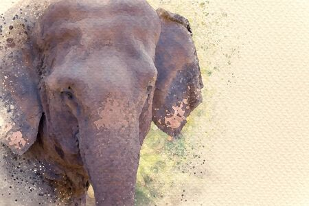Asian elephant face in forest. Digital watercolor painting effect. Copy space for text. Stock Photo