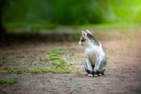 Cute grey and white cats face to the left and sit on the ground in the morning.