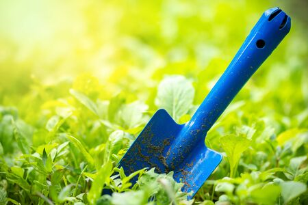 Yard garden tools and vegetable garden. Trowel stuck in the ground and morning sunlight at organic farm. Concept of agriculture. Closeup and copy space for text.