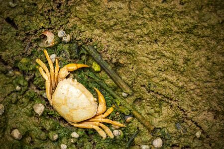 Crab dead on the mud. Closeup and copy space. The impact of the use of chemicals in agriculture. Imagens