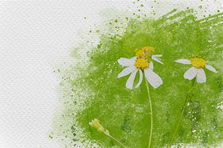 White flowering grass in green of meadow. Digital watercolor painting effect. Copy space for text. Stockfoto