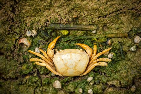 Crab dead on the mud. Closeup and copy space. The impact of the use of chemicals in agriculture. Stock Photo