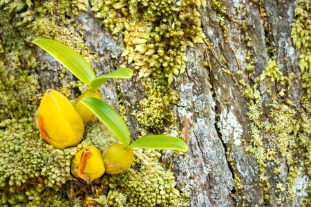 Orchid and moss on the tree in tropical forest. Closeup and copy space. Фото со стока