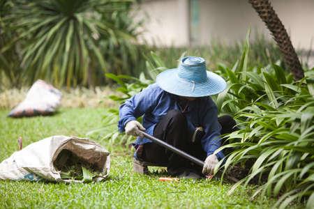gardener  photo