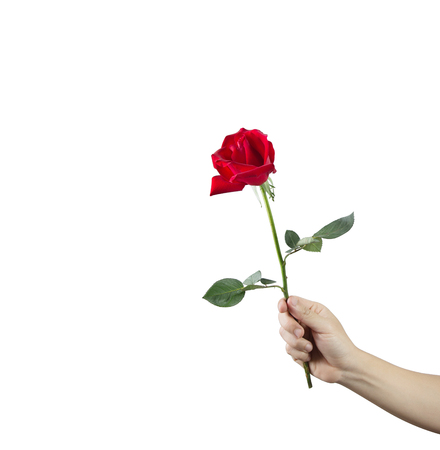 Giving a red rose in hand isolated on a white background. Valentine concept.