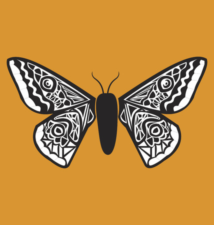 moth: Beautiful black and white moth