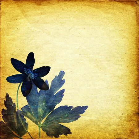 vintage background with floral elements photo