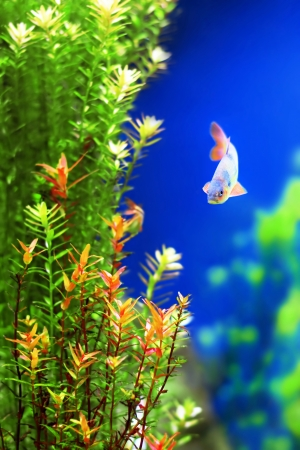 Tropical underwater plants with a fish photo