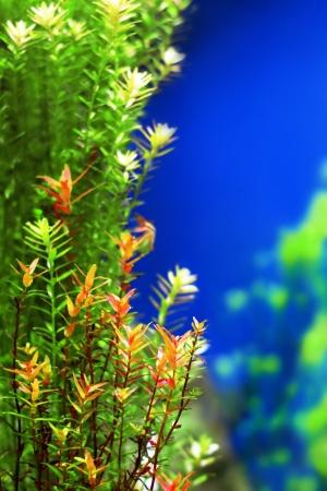 Tropical underwater plants Stock Photo