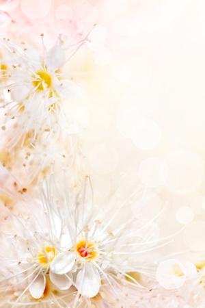 White floral border  photo