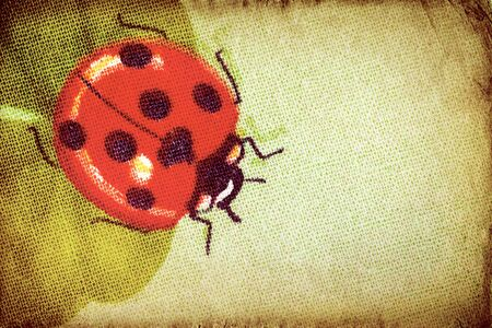 Vintage ladybug on the clover leaf  photo