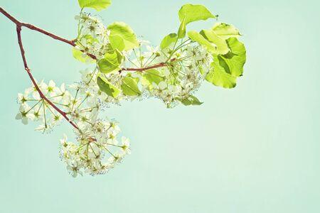 Beautiful tree blossoms photo