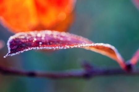 Frosty autumn leaf  Standard-Bild