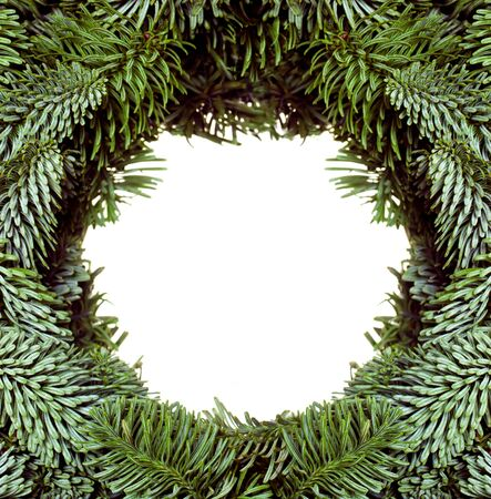 Frame from Christmas tree branches  photo