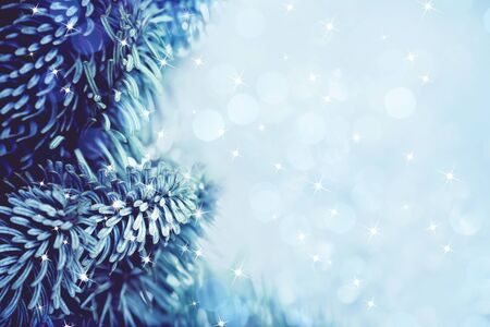 Frozen Christmas tree branch with stars sparkling