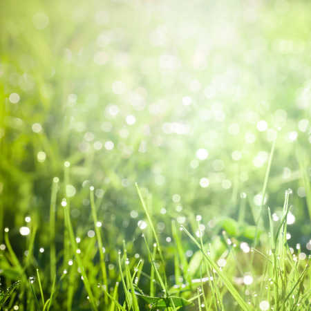 Fresh green grass with dew  photo